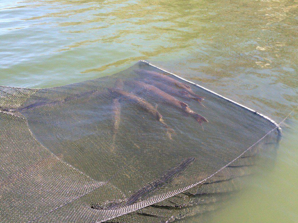 Musky Fishery Peaking At Glendale Lake Everybodyadventures
