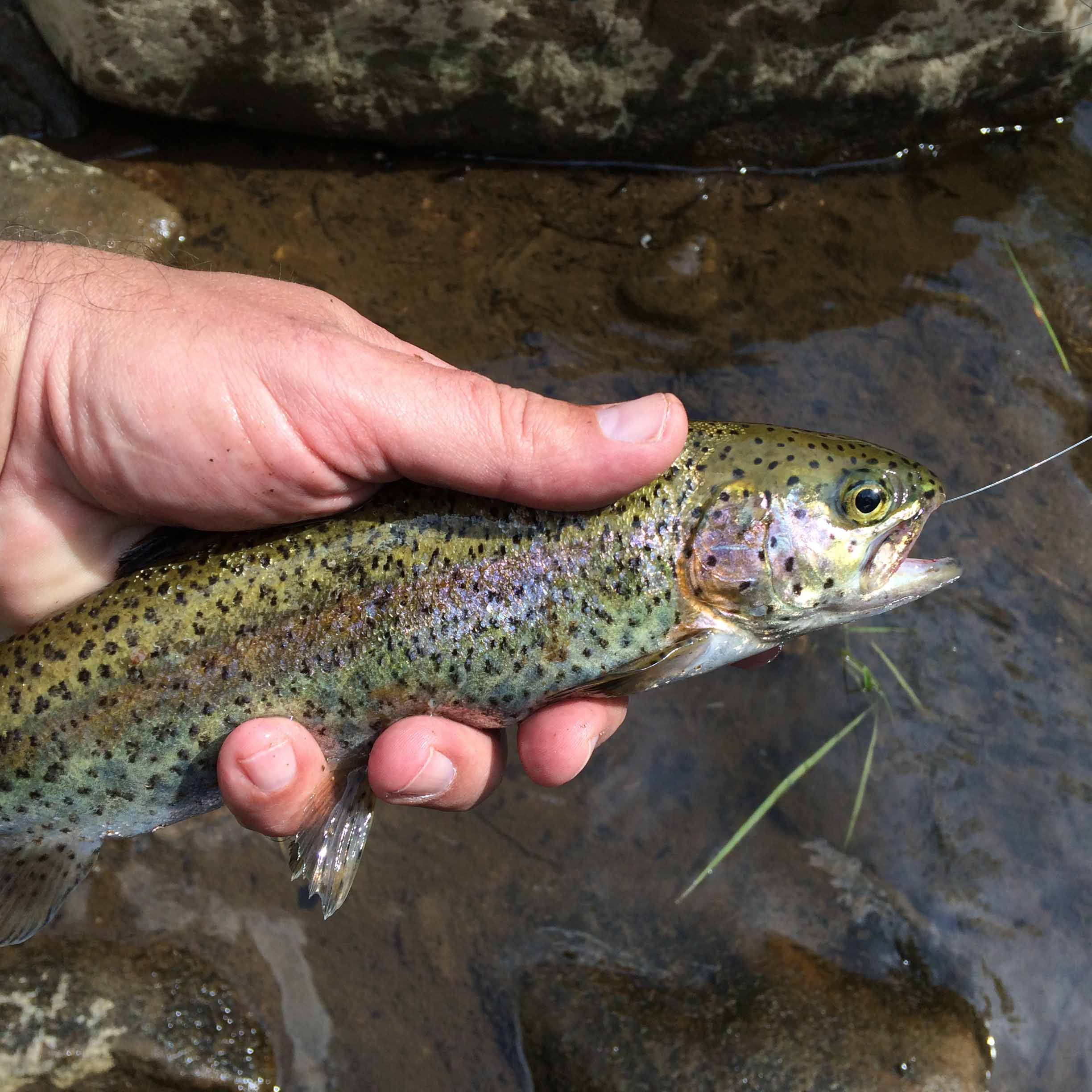 Weather disrupts some trout stockings everybodyadventures for Pa fish stocking