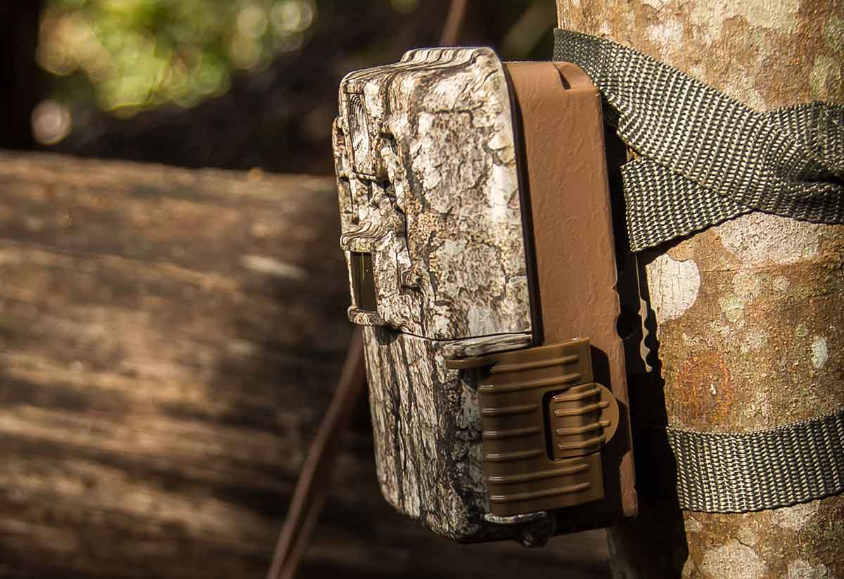 Using trail cameras is a great way to monitor whitetail numbers and activity. Photo: Pixabay