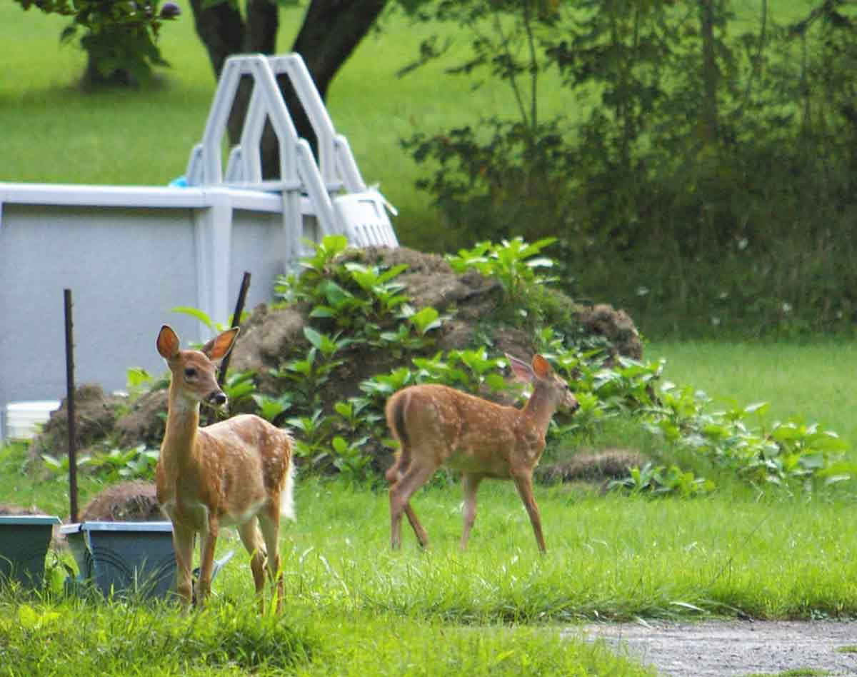 Backyard wildlife can include anything from butterflies to deer.