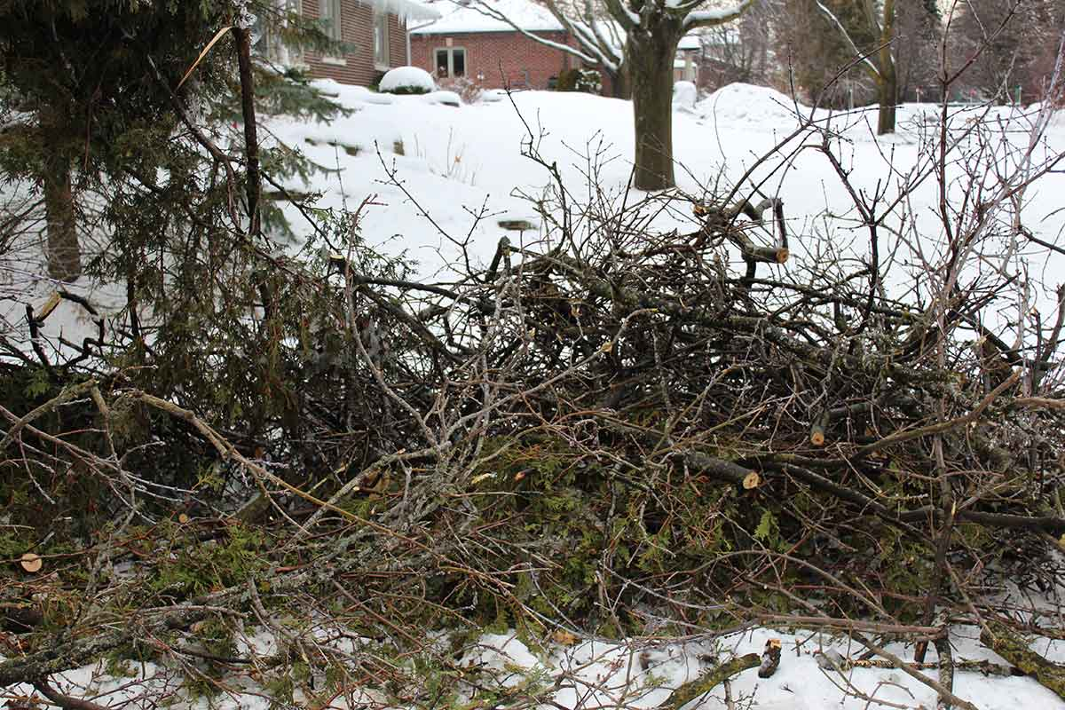 Brush piles attract all sorts of critters.