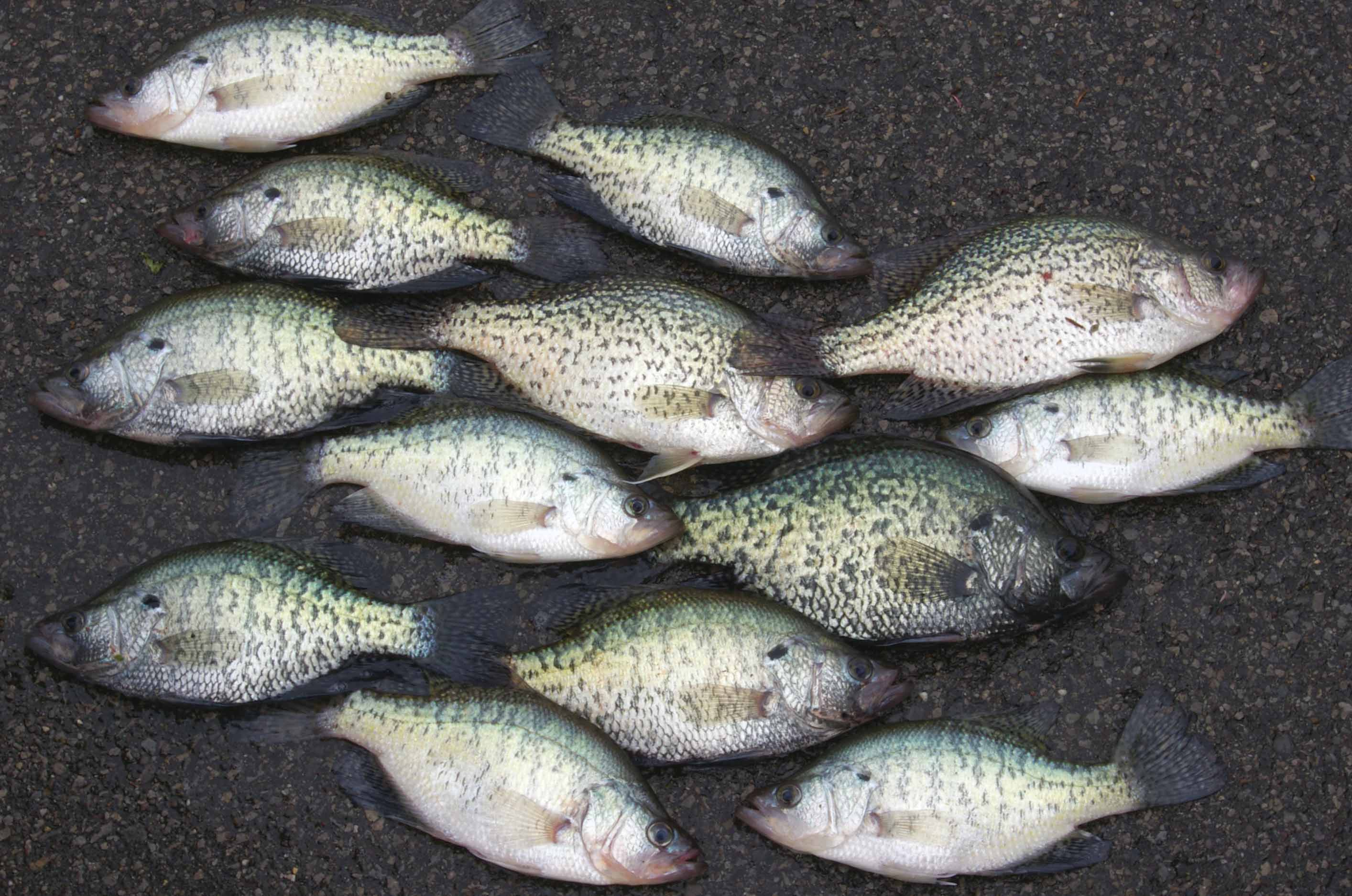 Crappie fishing can be exciting.
