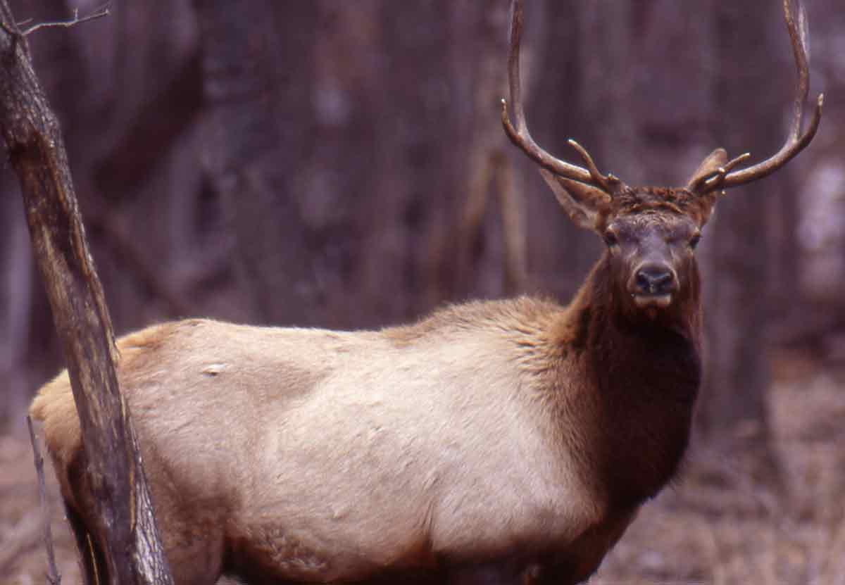 An elk hunt zone can vary in size.