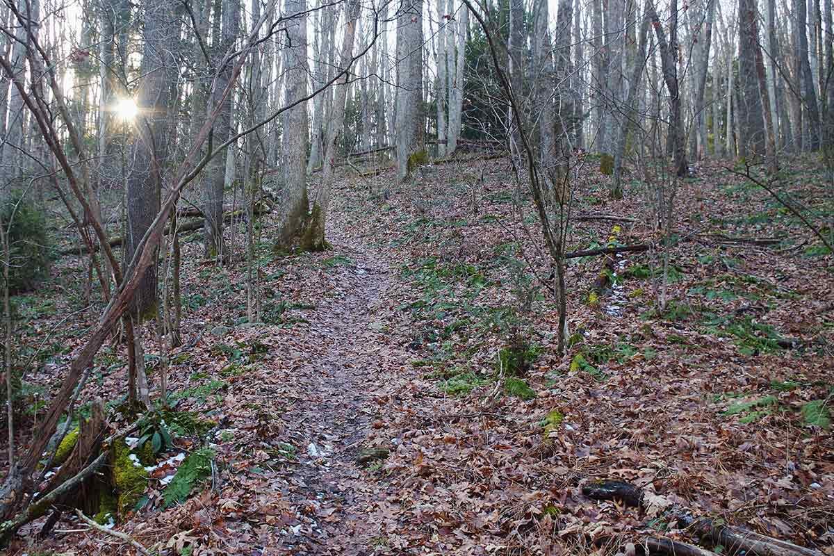 State forest wild areas vary in size, but all offer peace.