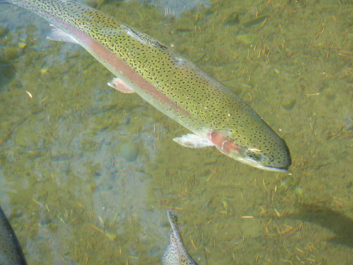 Warm water often produces stressed fish.