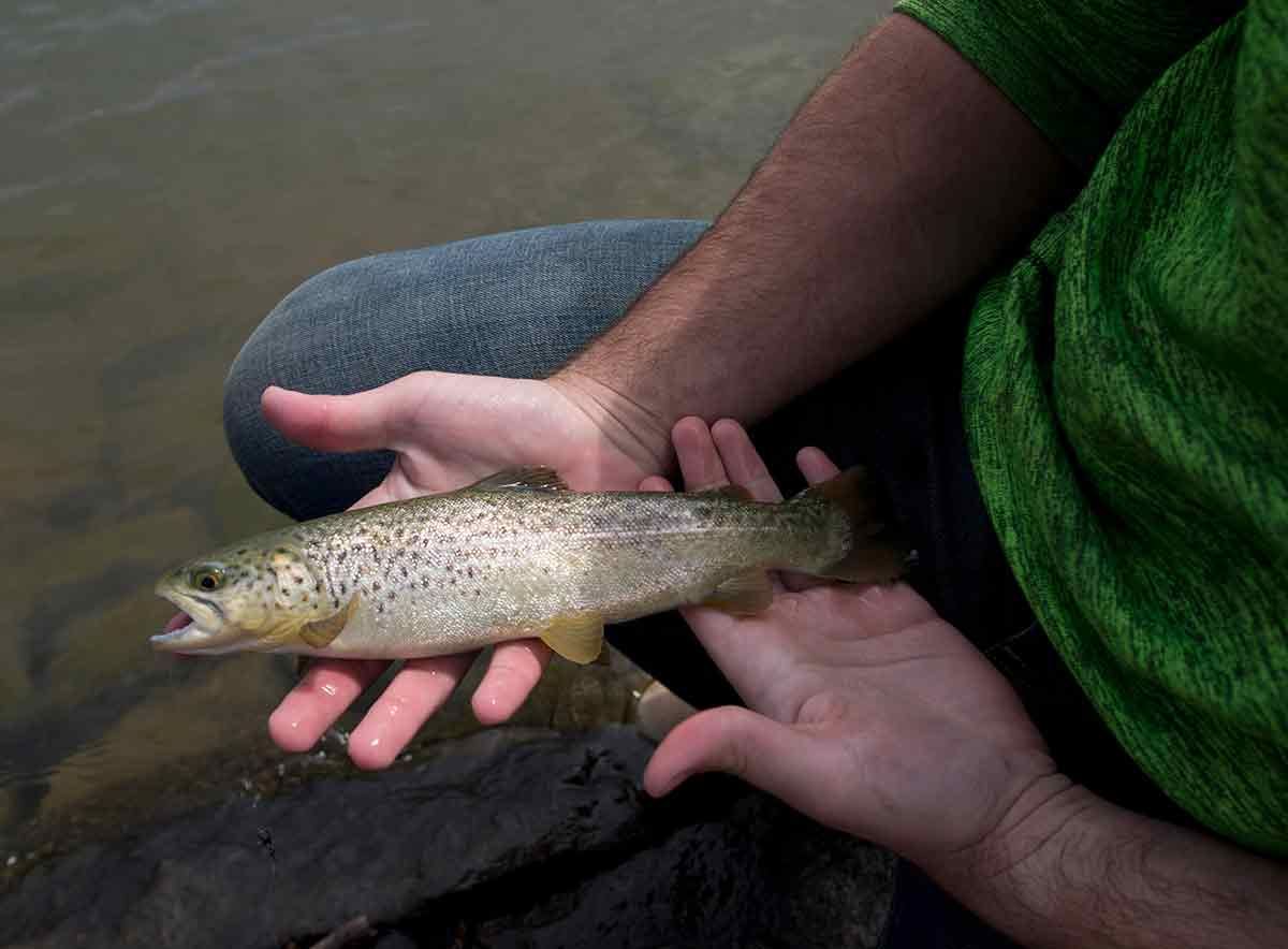 Day three of outdoor odyssey sees fresh fish but little for Stocked trout fishing