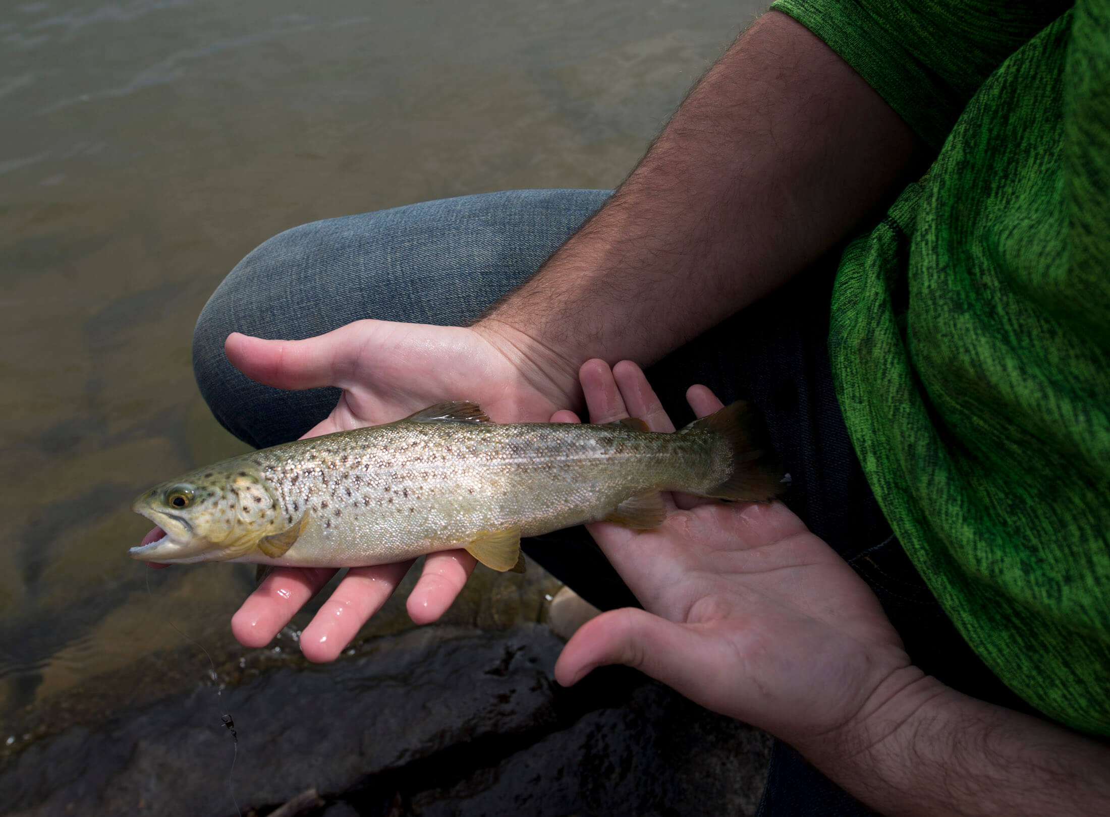 A stream that is many hope the last of its kind for Pa fish stocking