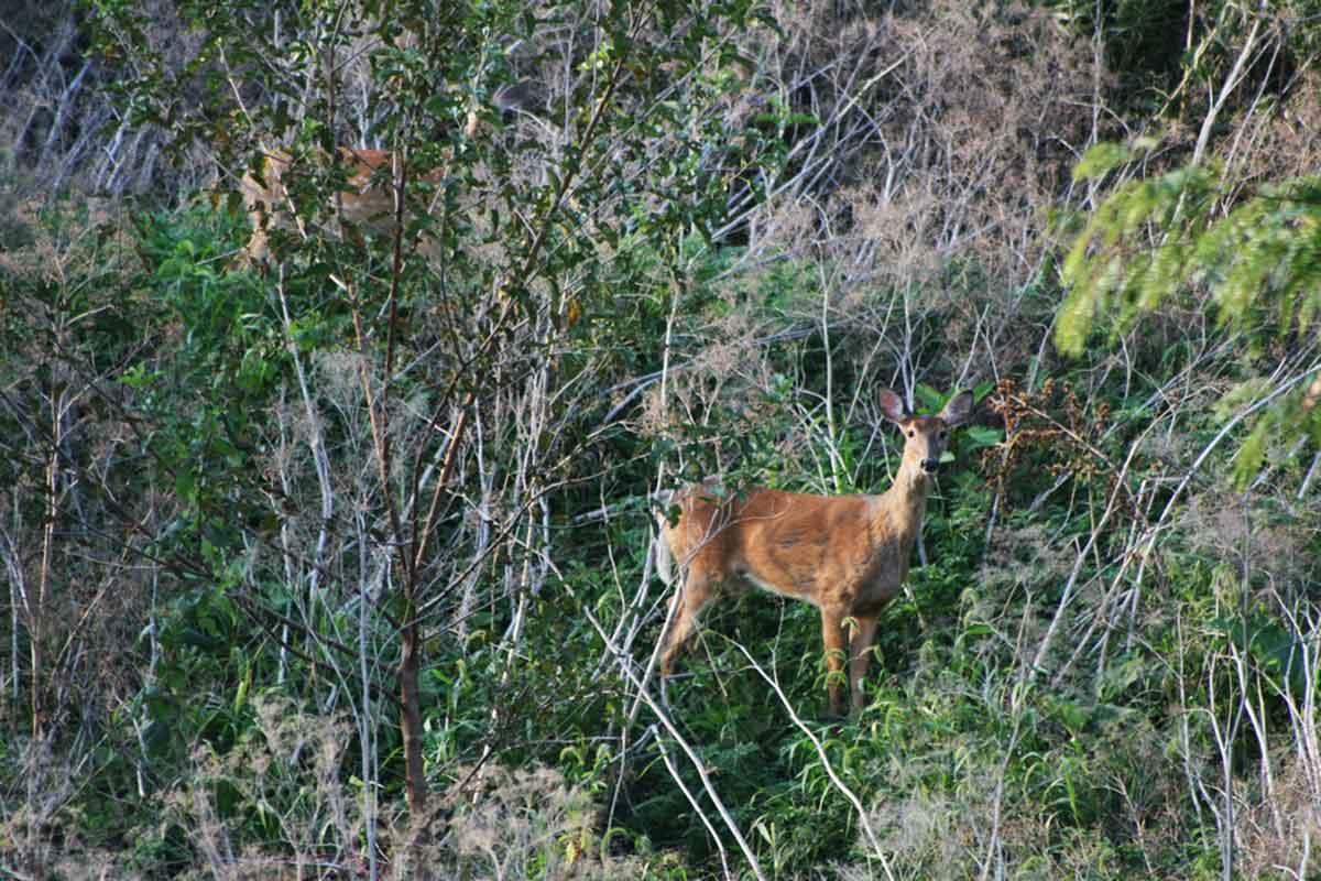 Wasting disease kills deer.