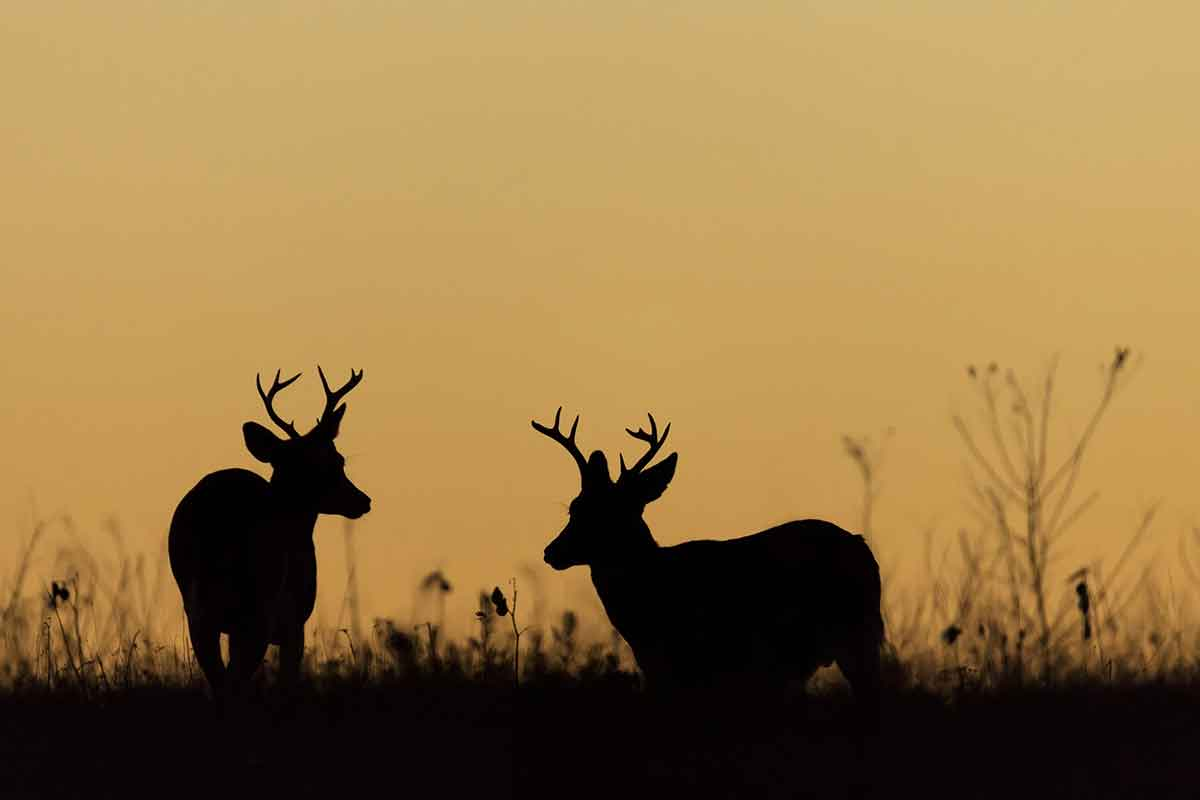 The Whitetail Report is comprehensive.