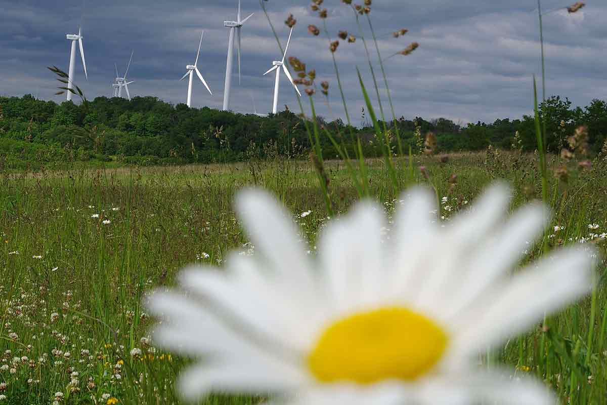 Windmills aren't welcome on state game lands.