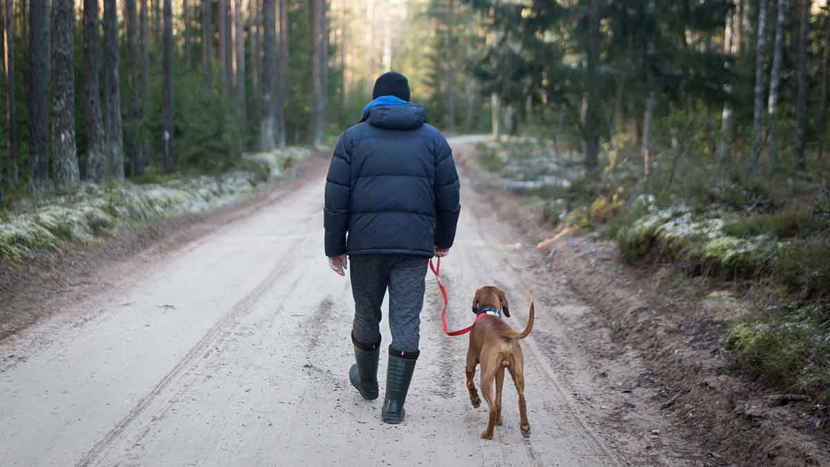 Winter hiking with dogs requires care.
